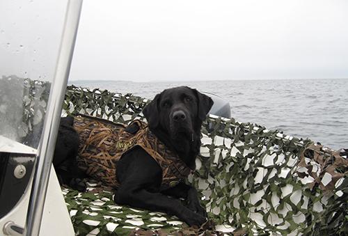 merella-noutaja